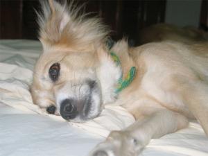 Hund hat Durchfall - was kann ich tun?