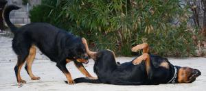 Hunde beschnuppern sich am After