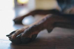 Nagelpflege Hunde Pflege