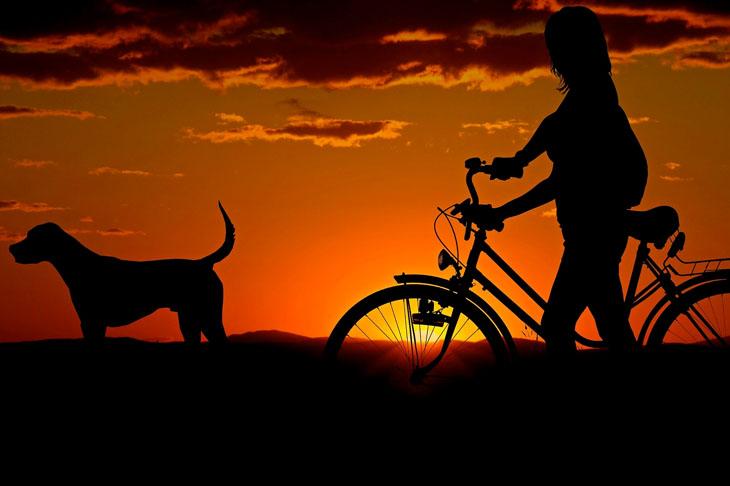 Hunde Fahrradanhänger